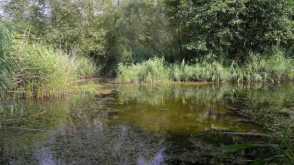 Je größer, besonnter und strukturreicher hinsichtlich der Vegetation ein Gewässer ist, desto höher ist der durchschnittliche Anteil an gefährdeten Arten.