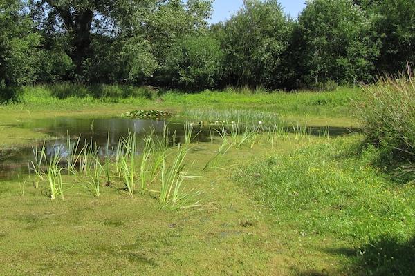 Vegetationsreiches Kleingewässer im NSG Im Siesack.