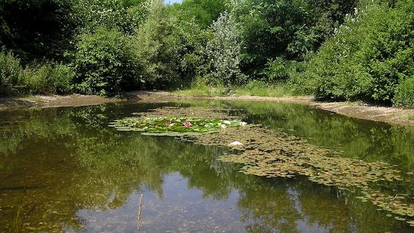 Auf manchen Brachen gibt es als weiteren Gewässertyp meist aus Naturschutzgründen angelegte Folienteiche.