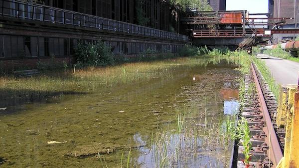 Solche Gewässer können trotz allem interessante Vegetationsstrukturen aufweisen.