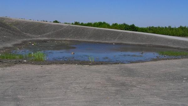An Pioniergewässern ist die Vegetation extrem strukturarm.