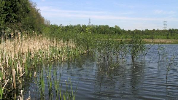 Auch Vegetationsausstattung ähnelt sehr einem natürlichen Gewässer.